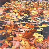 fall leaves, New Haven